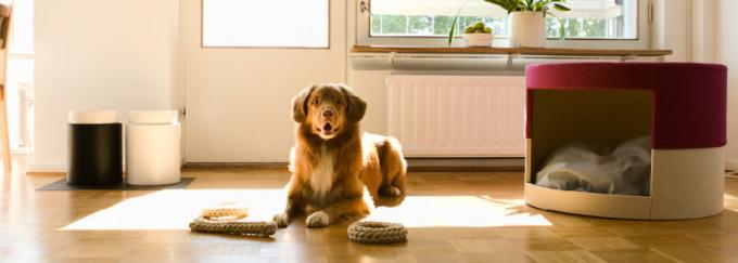 Cómo decorar si hay mascotas en casa