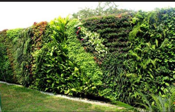 Jardines verticales: la nueva moda de decoración exterior